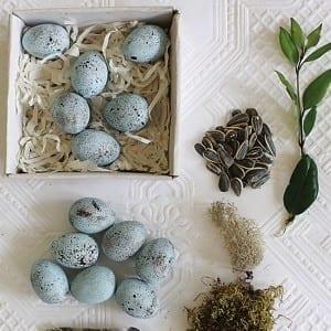 Blue Eggs from Antique Farmhouse
