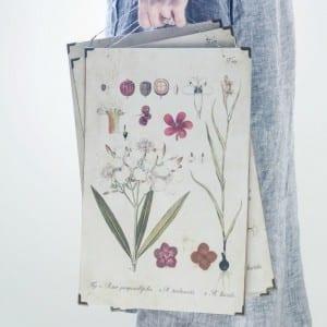 Botanical Print from Antique Farmhouse